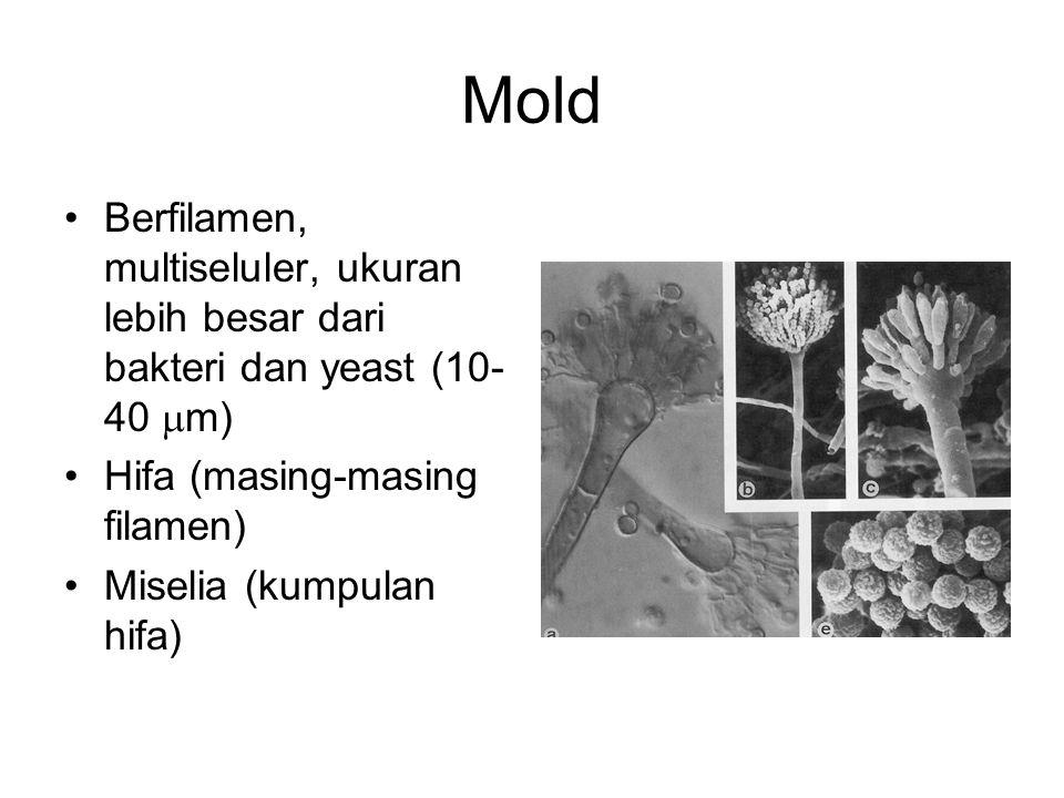 Mold Berfilamen, multiseluler, ukuran lebih besar dari bakteri dan yeast (10- 40  m) Hifa (masing-masing filamen) Miselia (kumpulan hifa)