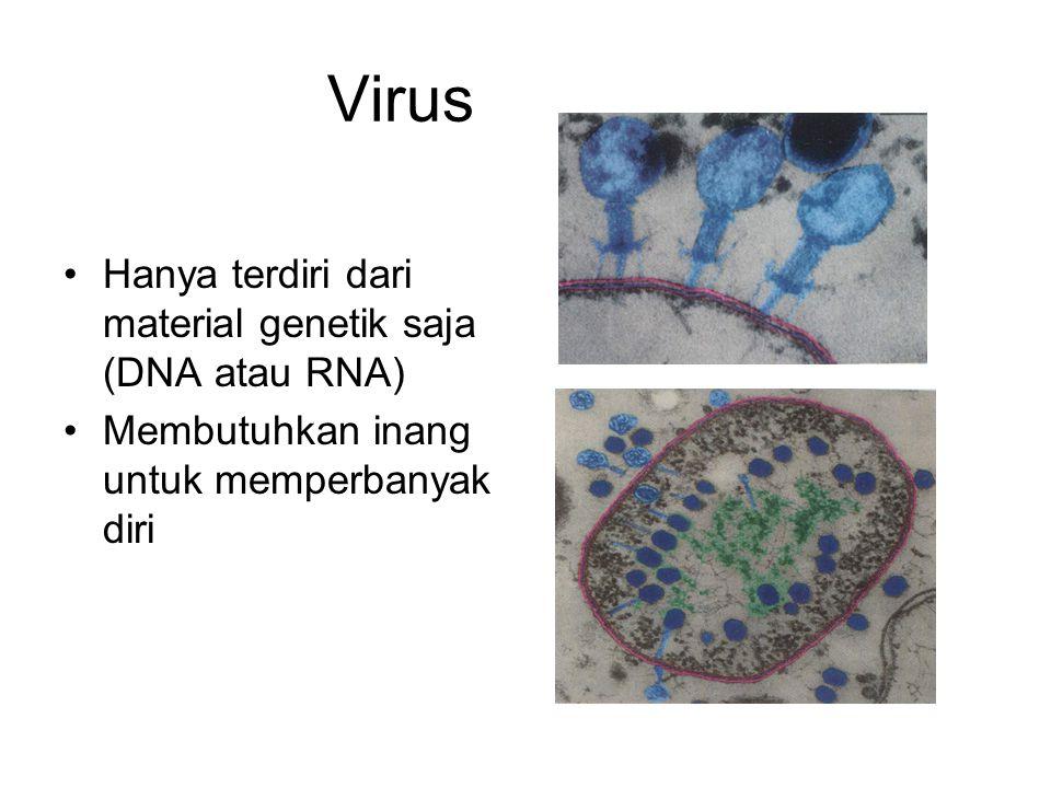 Virus Hanya terdiri dari material genetik saja (DNA atau RNA) Membutuhkan inang untuk memperbanyak diri
