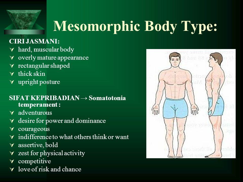 Mesomorphic Body Type: CIRI JASMANI:  hard, muscular body  overly mature appearance  rectangular shaped  thick skin  upright posture SIFAT KEPRIB