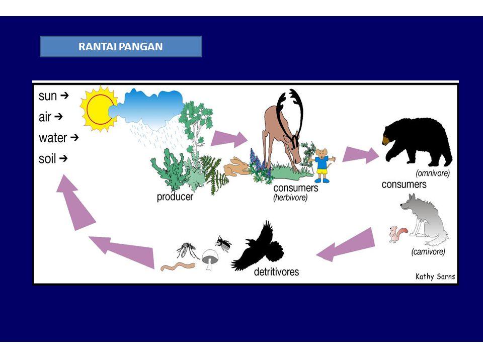 Dalam suatu ekosistem, rantai-rantai pangan berkaitan satu sama lain membentuk suatu jaring pangan ( food web ) Dalam suatu ekosistem dikenal adanya t