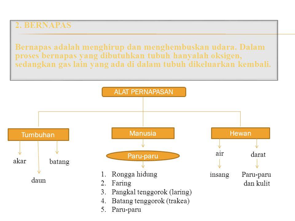 2. BERNAPAS Bernapas adalah menghirup dan menghembuskan udara. Dalam proses bernapas yang dibutuhkan tubuh hanyalah oksigen, sedangkan gas lain yang a
