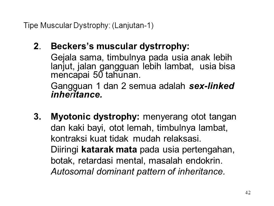 42 Tipe Muscular Dystrophy: (Lanjutan-1) 2.Beckers's muscular dystrrophy: Gejala sama, timbulnya pada usia anak lebih lanjut, jalan gangguan lebih lam