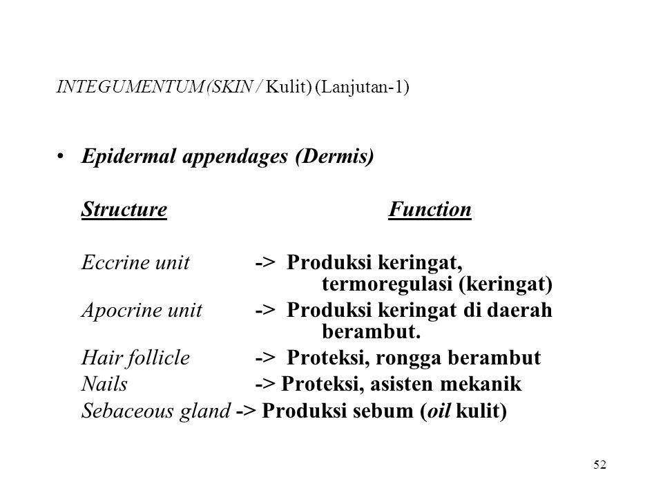 52 INTEGUMENTUM (SKIN / Kulit) (Lanjutan-1) Epidermal appendages (Dermis) StructureFunction Eccrine unit-> Produksi keringat, termoregulasi (keringat)