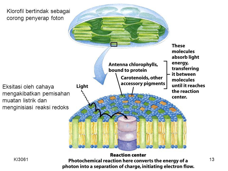 KI3061Zeily Nurachman13 Eksitasi oleh cahaya mengakibatkan pemisahan muatan listrik dan menginisiasi reaksi redoks Klorofil bertindak sebagai corong penyerap foton