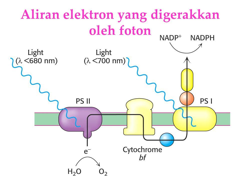 KI3061Zeily Nurachman15 Aliran elektron yang digerakkan oleh foton