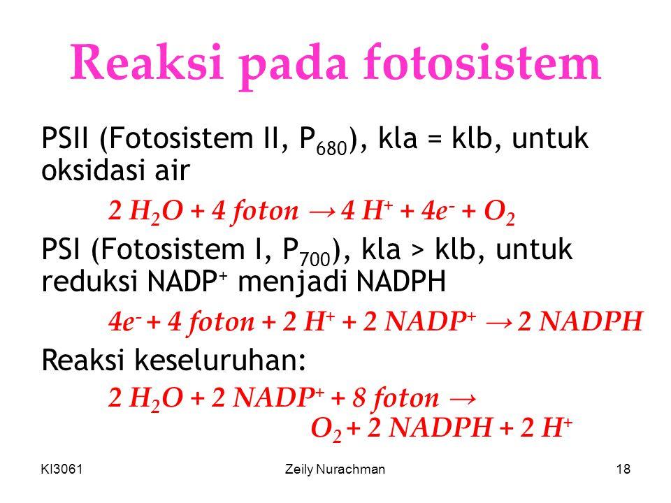 KI3061Zeily Nurachman18 Reaksi pada fotosistem PSII (Fotosistem II, P 680 ), kla = klb, untuk oksidasi air 2 H 2 O + 4 foton → 4 H + + 4e - + O 2 PSI (Fotosistem I, P 700 ), kla > klb, untuk reduksi NADP + menjadi NADPH 4e - + 4 foton + 2 H + + 2 NADP + → 2 NADPH Reaksi keseluruhan: 2 H 2 O + 2 NADP + + 8 foton → O 2 + 2 NADPH + 2 H +