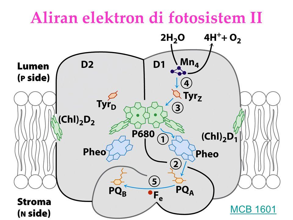 KI3061Zeily Nurachman19 Aliran elektron di fotosistem II MCB 1601
