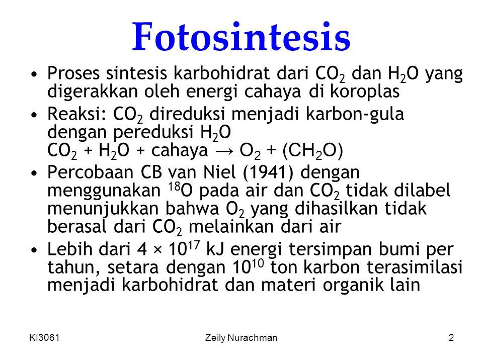 KI3061Zeily Nurachman43 Tanaman tropis (jalur C 4 ) Suhu ↑, aktivitas oksigenasi > karboksilasi Harusnya fotorespirasi ↑ Bagaimana tanaman tropis seperti tebu bertahan.