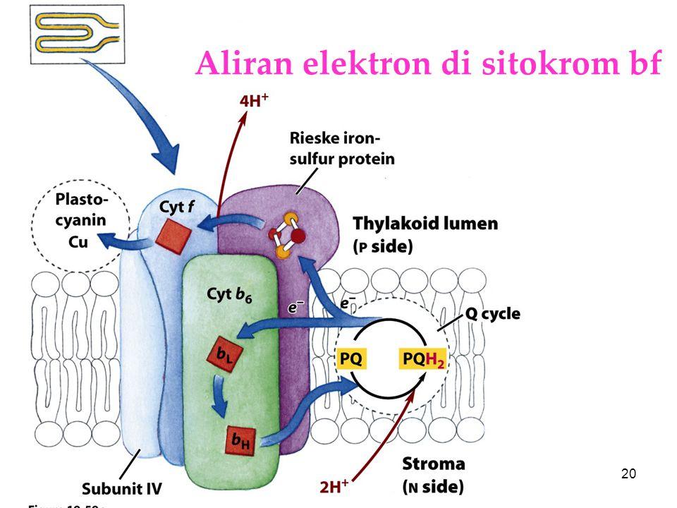 KI3061Zeily Nurachman20 Aliran elektron di sitokrom bf