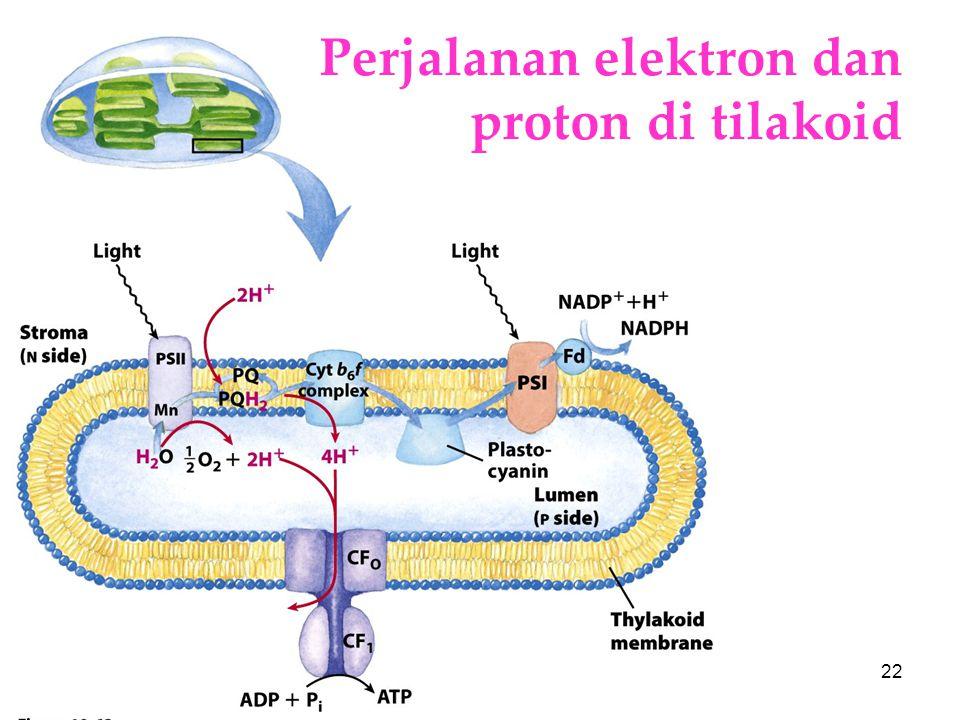 KI3061Zeily Nurachman22 Perjalanan elektron dan proton di tilakoid