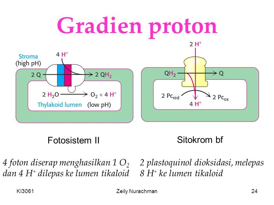 KI3061Zeily Nurachman24 Gradien proton Fotosistem II Sitokrom bf 4 foton diserap menghasilkan 1 O 2 dan 4 H + dilepas ke lumen tikaloid 2 plastoquinol dioksidasi, melepas 8 H + ke lumen tikaloid