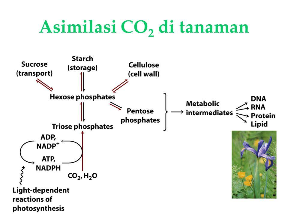 KI3061Zeily Nurachman29 Asimilasi CO 2 di tanaman