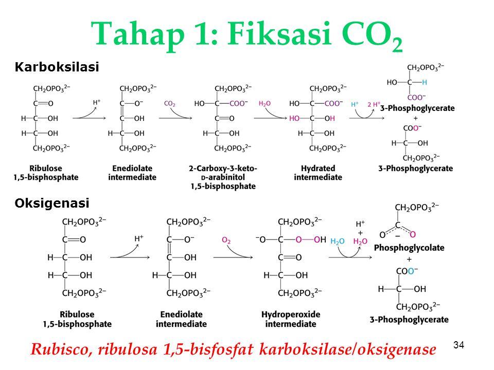 KI3061Zeily Nurachman34 Tahap 1: Fiksasi CO 2 Rubisco, ribulosa 1,5-bisfosfat karboksilase/oksigenase Karboksilasi Oksigenasi