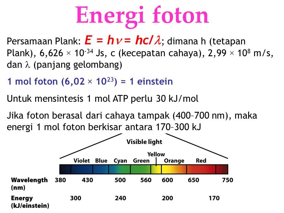 KI3061Zeily Nurachman8 Energi foton Persamaan Plank: E = h = h c/ ; dimana h (tetapan Plank), 6,626 × 10 -34 Js, c (kecepatan cahaya), 2,99 × 10 8 m/s, dan (panjang gelombang) 1 mol foton (6,02 × 10 23 ) = 1 einstein Untuk mensintesis 1 mol ATP perlu 30 kJ/mol Jika foton berasal dari cahaya tampak (400–700 nm), maka energi 1 mol foton berkisar antara 170–300 kJ