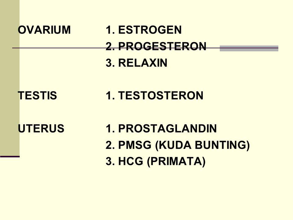 MEKANISME KERJA HORMONAL PADA TERNAK BETINA HIpotalamus Umpan balik Positif GnRH Negatif Hipofisa Anterior LTH FSH LH Inhibin Ovarium Folikel sedang Ovulasi tumbuh Asam asetat Korpus Luteum Kolesterol  3 Pregnenolone Progesteron 17  -OH-Pregnenolone 17  -OH-Progesteron Dehidroepiandrosterone Androstendione Testosterone 19-OH-Androstendione 19-OH-Testosterone Estrone Estradiol 17 
