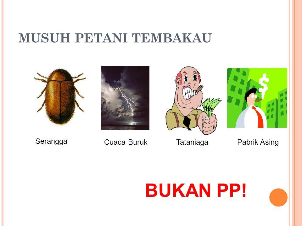 MUSUH PETANI TEMBAKAU BUKAN PP! Serangga Cuaca BurukTataniaga Pabrik Asing