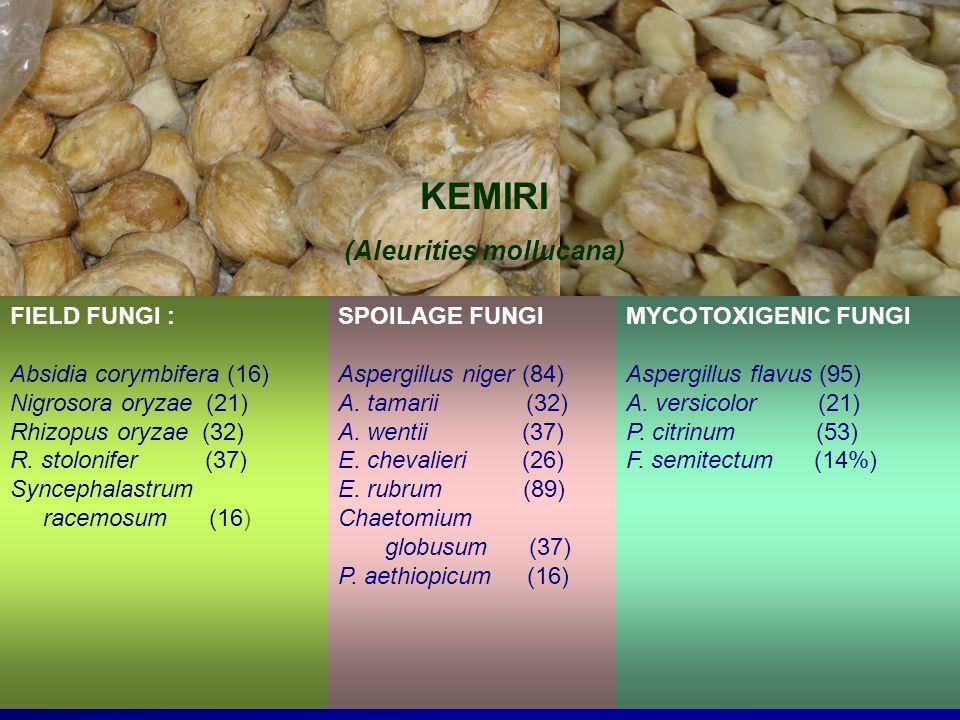 FIELD FUNGI : Absidia corymbifera (16) Nigrosora oryzae (21) Rhizopus oryzae (32) R.