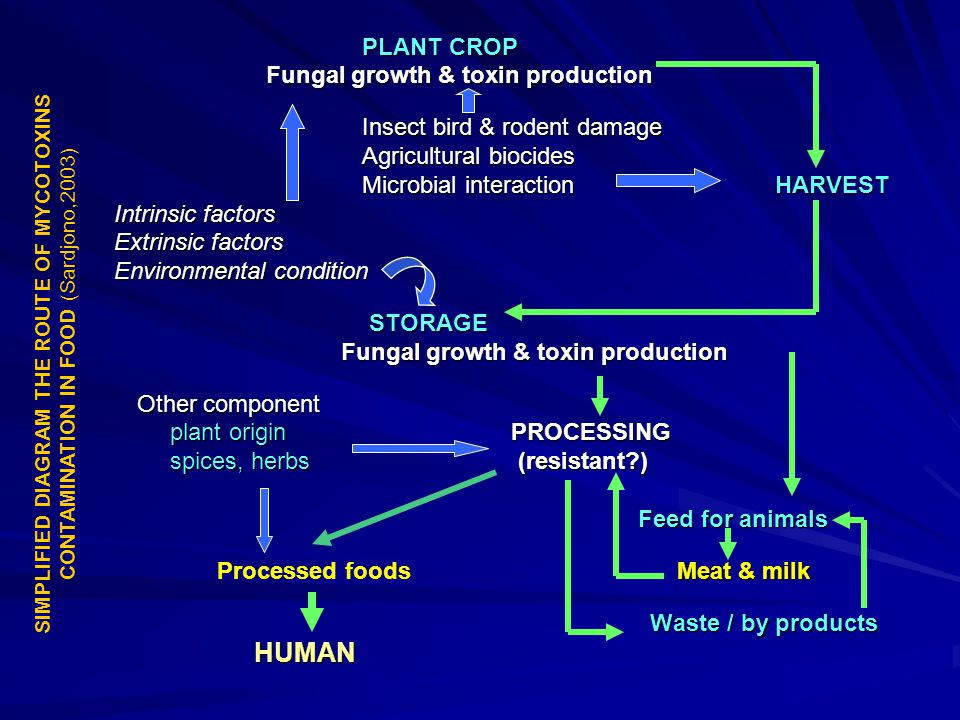 PLANT CROP PLANT CROP Fungal growth & toxin production Fungal growth & toxin production Insect bird & rodent damage Agricultural biocides Microbial in