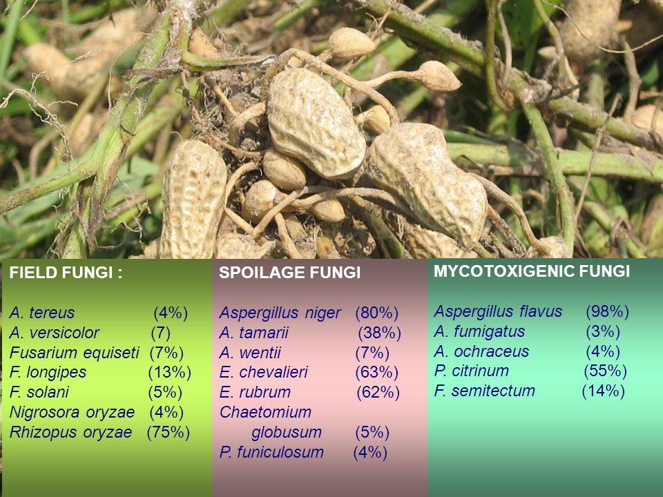 FIELD FUNGI : A.tereus (4%) A. versicolor (7) Fusarium equiseti (7%) F.