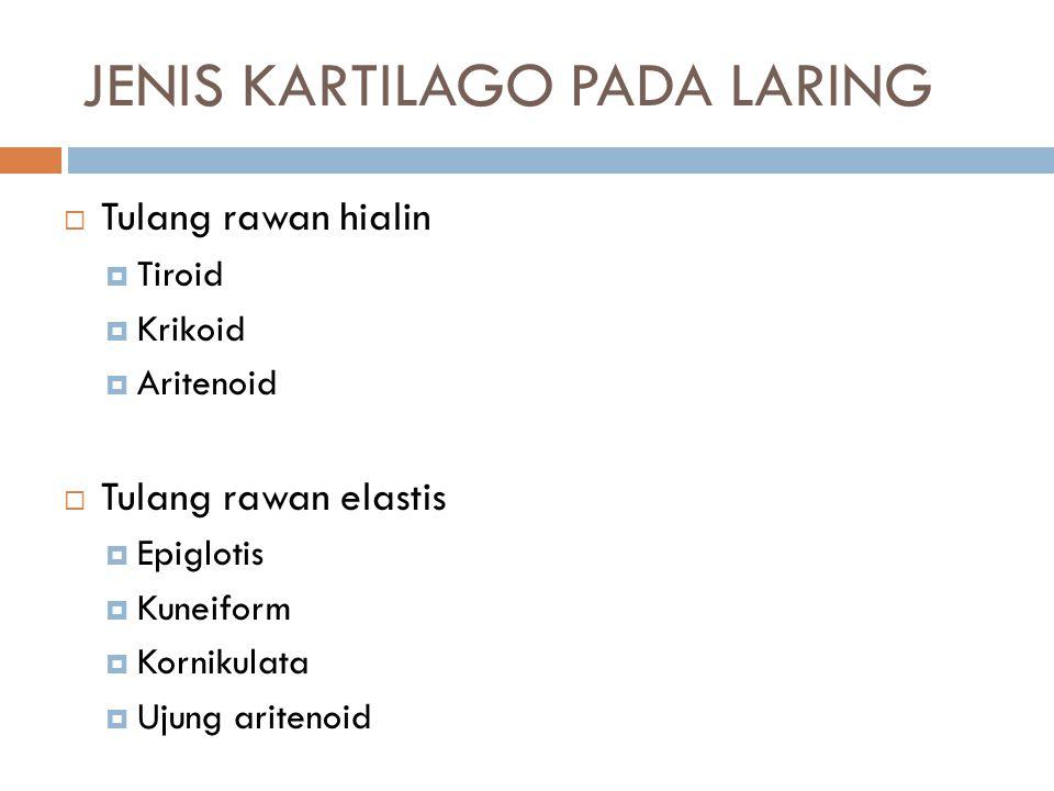JENIS KARTILAGO PADA LARING  Tulang rawan hialin  Tiroid  Krikoid  Aritenoid  Tulang rawan elastis  Epiglotis  Kuneiform  Kornikulata  Ujung