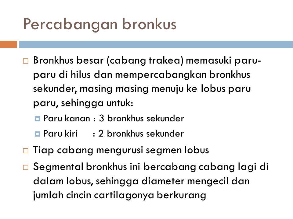 Percabangan bronkus  Bronkhus besar (cabang trakea) memasuki paru- paru di hilus dan mempercabangkan bronkhus sekunder, masing masing menuju ke lobus