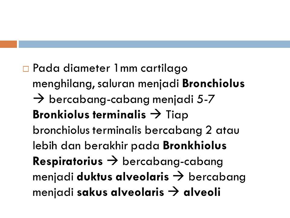  Pada diameter 1mm cartilago menghilang, saluran menjadi Bronchiolus  bercabang-cabang menjadi 5-7 Bronkiolus terminalis  Tiap bronchiolus terminal