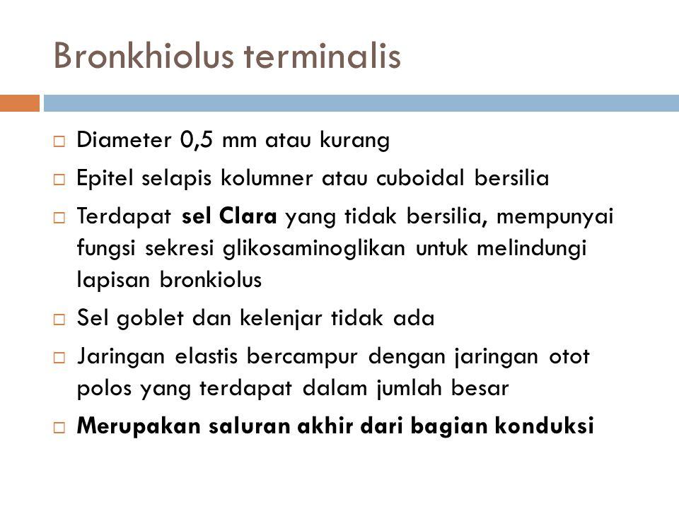 Bronkhiolus terminalis  Diameter 0,5 mm atau kurang  Epitel selapis kolumner atau cuboidal bersilia  Terdapat sel Clara yang tidak bersilia, mempun