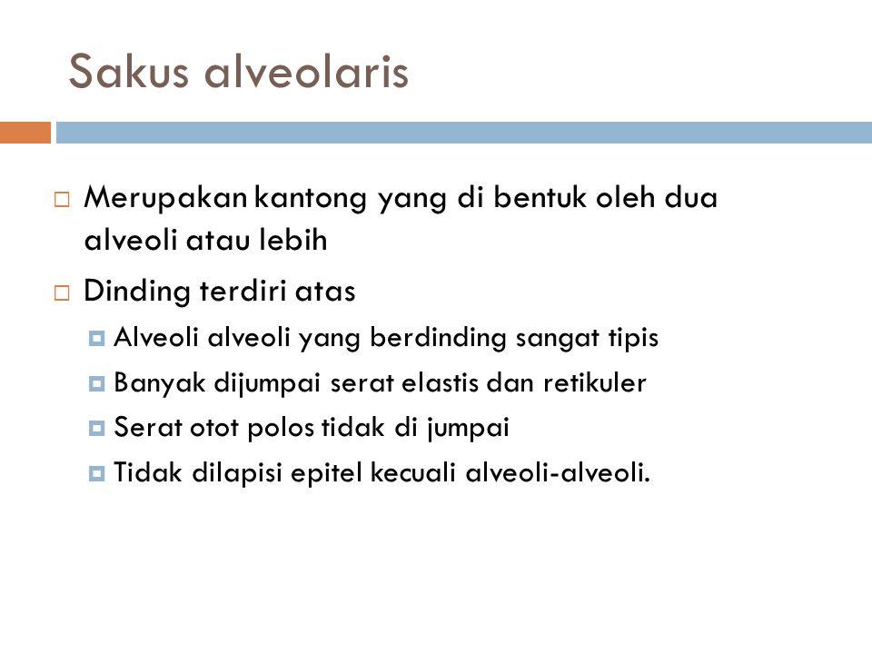 Sakus alveolaris  Merupakan kantong yang di bentuk oleh dua alveoli atau lebih  Dinding terdiri atas  Alveoli alveoli yang berdinding sangat tipis