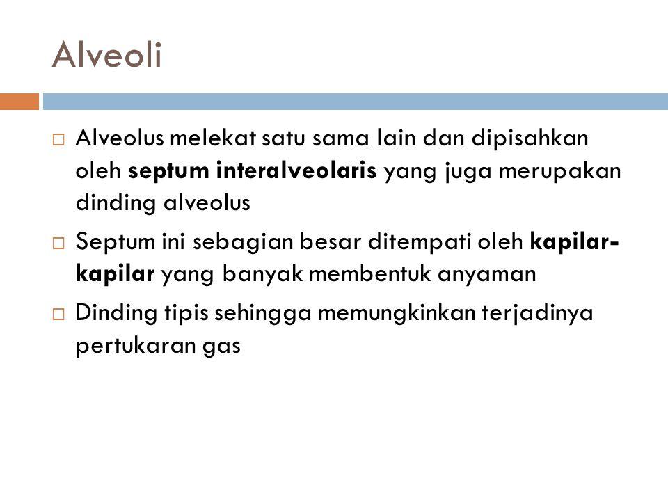 Alveoli  Alveolus melekat satu sama lain dan dipisahkan oleh septum interalveolaris yang juga merupakan dinding alveolus  Septum ini sebagian besar