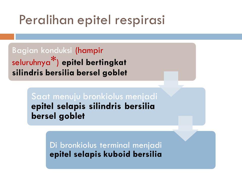 Peralihan epitel respirasi Bagian konduksi (hampir seluruhnya * ) epitel bertingkat silindris bersilia bersel goblet Saat menuju bronkiolus menjadi ep