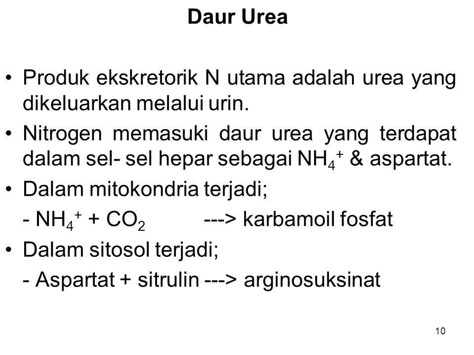 10 Daur Urea Produk ekskretorik N utama adalah urea yang dikeluarkan melalui urin. Nitrogen memasuki daur urea yang terdapat dalam sel- sel hepar seba