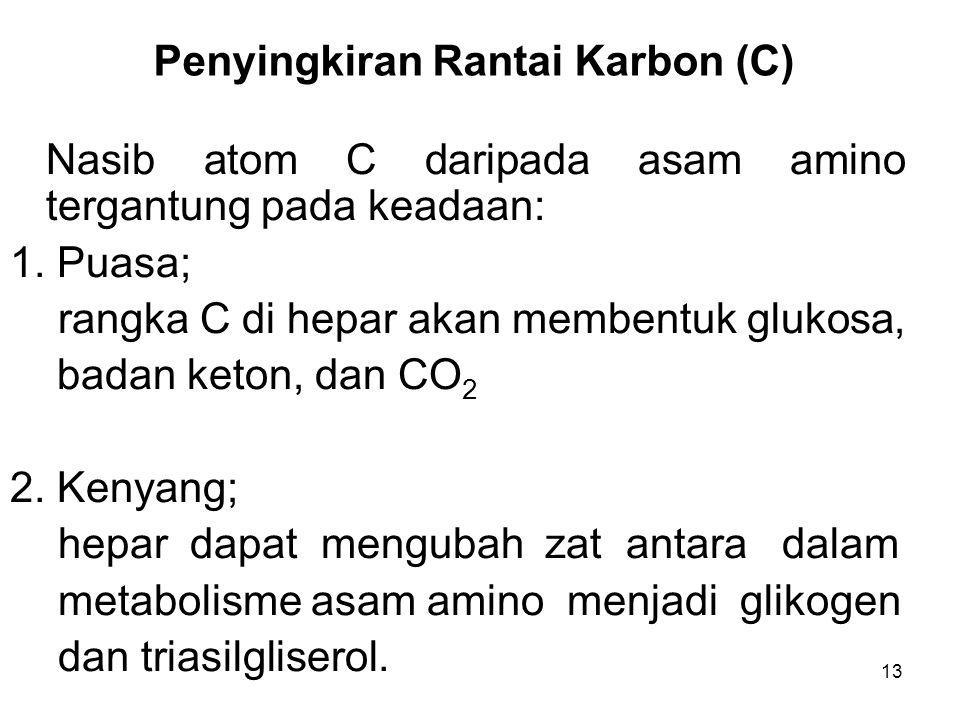 13 Penyingkiran Rantai Karbon (C) Nasib atom C daripada asam amino tergantung pada keadaan: 1. Puasa; rangka C di hepar akan membentuk glukosa, badan