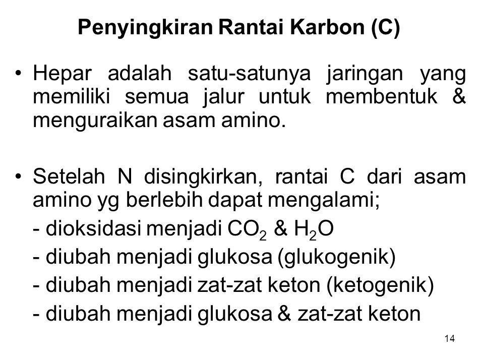 14 Penyingkiran Rantai Karbon (C) Hepar adalah satu-satunya jaringan yang memiliki semua jalur untuk membentuk & menguraikan asam amino. Setelah N dis