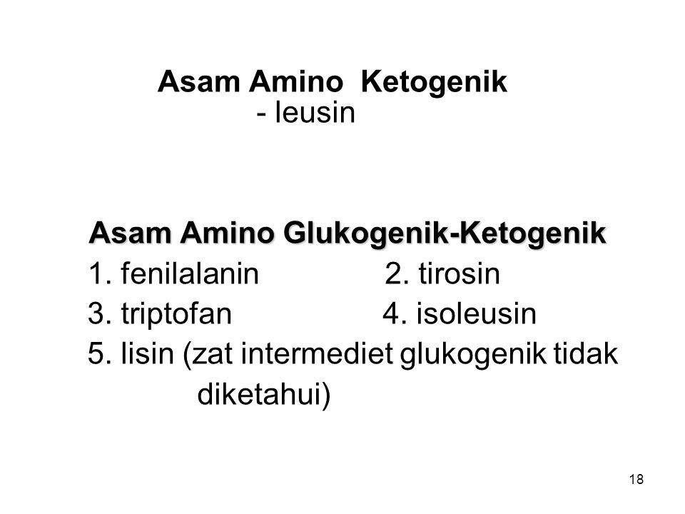 18 Asam Amino Ketogenik - leusin Asam Amino Glukogenik-Ketogenik 1. fenilalanin 2. tirosin 3. triptofan 4. isoleusin 5. lisin (zat intermediet glukoge