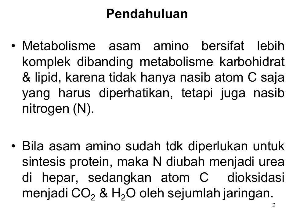 2 Pendahuluan Metabolisme asam amino bersifat lebih komplek dibanding metabolisme karbohidrat & lipid, karena tidak hanya nasib atom C saja yang harus