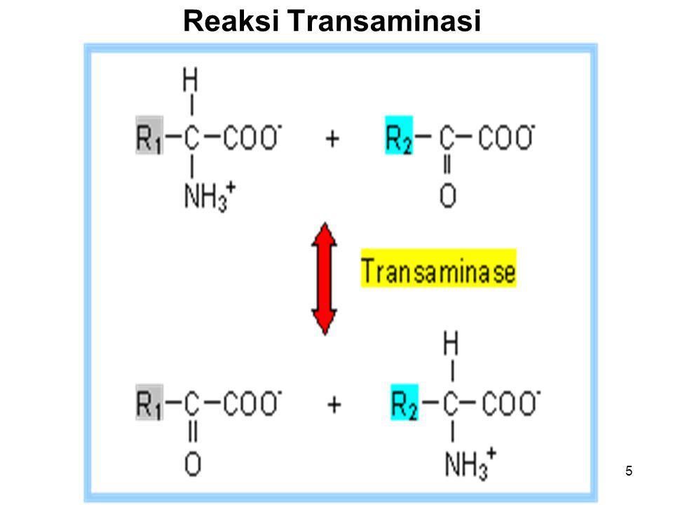 5 Reaksi Transaminasi