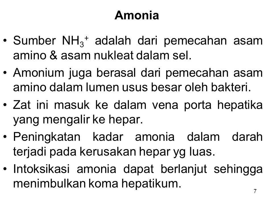 7 Amonia Sumber NH 3 + adalah dari pemecahan asam amino & asam nukleat dalam sel. Amonium juga berasal dari pemecahan asam amino dalam lumen usus besa