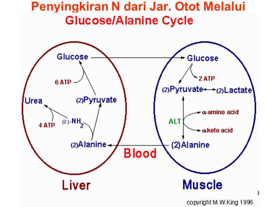 8 Penyingkiran N dari Jar. Otot Melalui