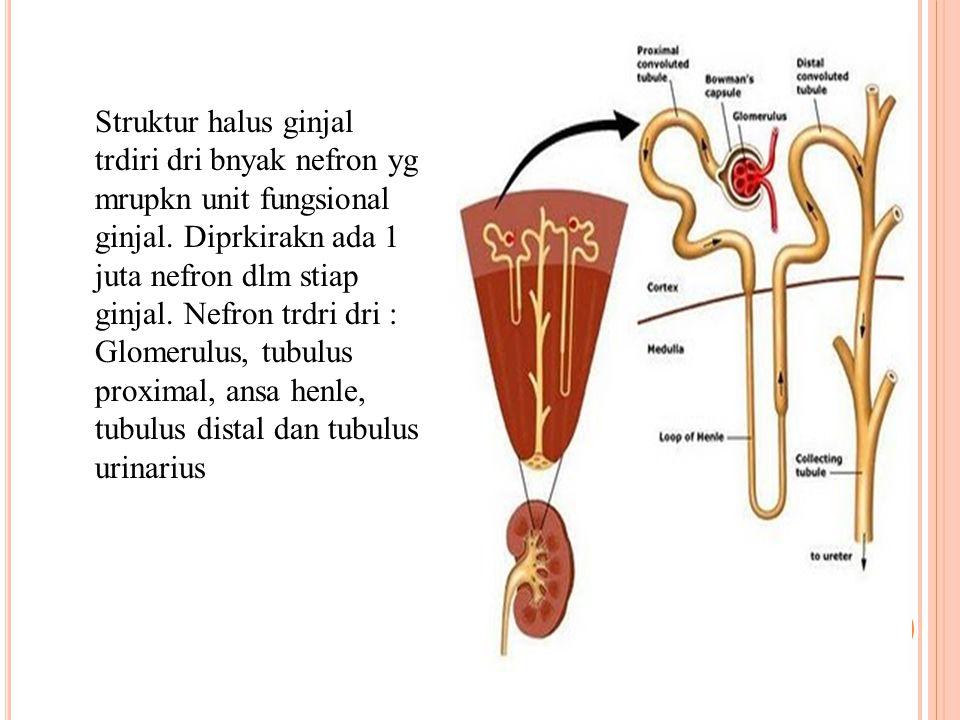 1. Ginjal (Ren) Ginjal trletak pada dinding posterior abdomen di blkang peritoneum pd kedua sisi vertebra thorakalis ke 12 smpai vertebra lumbalis ke-