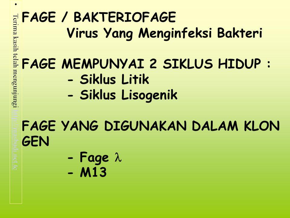 Terima kasih telah mengunjungi http://masbudi.net.tchttp://masbudi.net.tc FAGE / BAKTERIOFAGE Virus Yang Menginfeksi Bakteri FAGE MEMPUNYAI 2 SIKLUS H