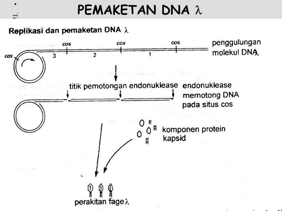 Terima kasih telah mengunjungi http://masbudi.net.tchttp://masbudi.net.tc PEMAKETAN DNA