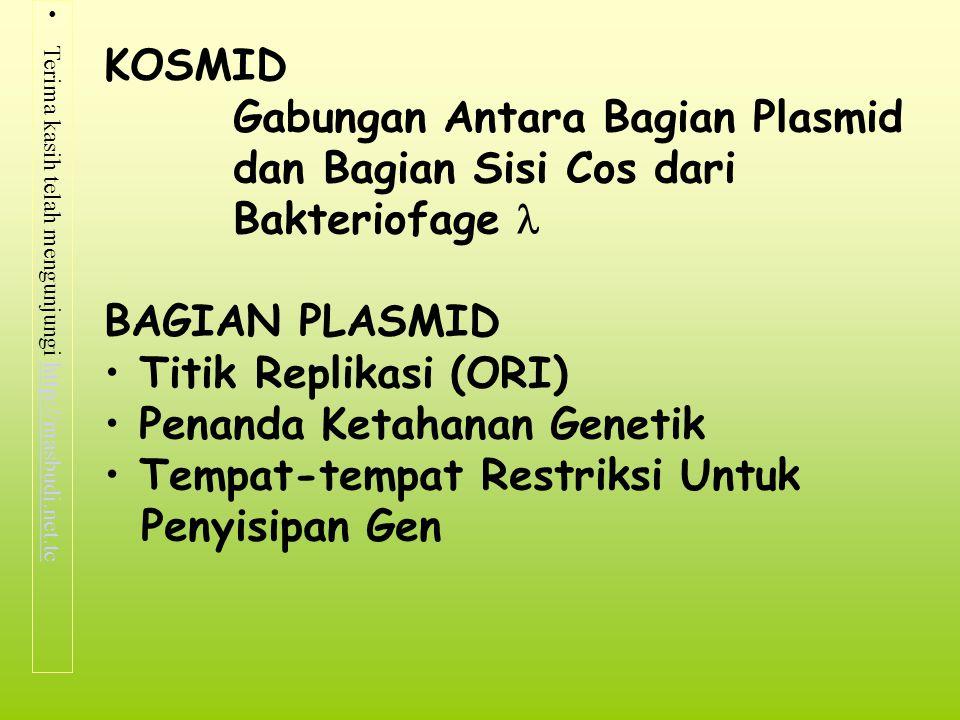 Terima kasih telah mengunjungi http://masbudi.net.tchttp://masbudi.net.tc KOSMID Gabungan Antara Bagian Plasmid dan Bagian Sisi Cos dari Bakteriofage