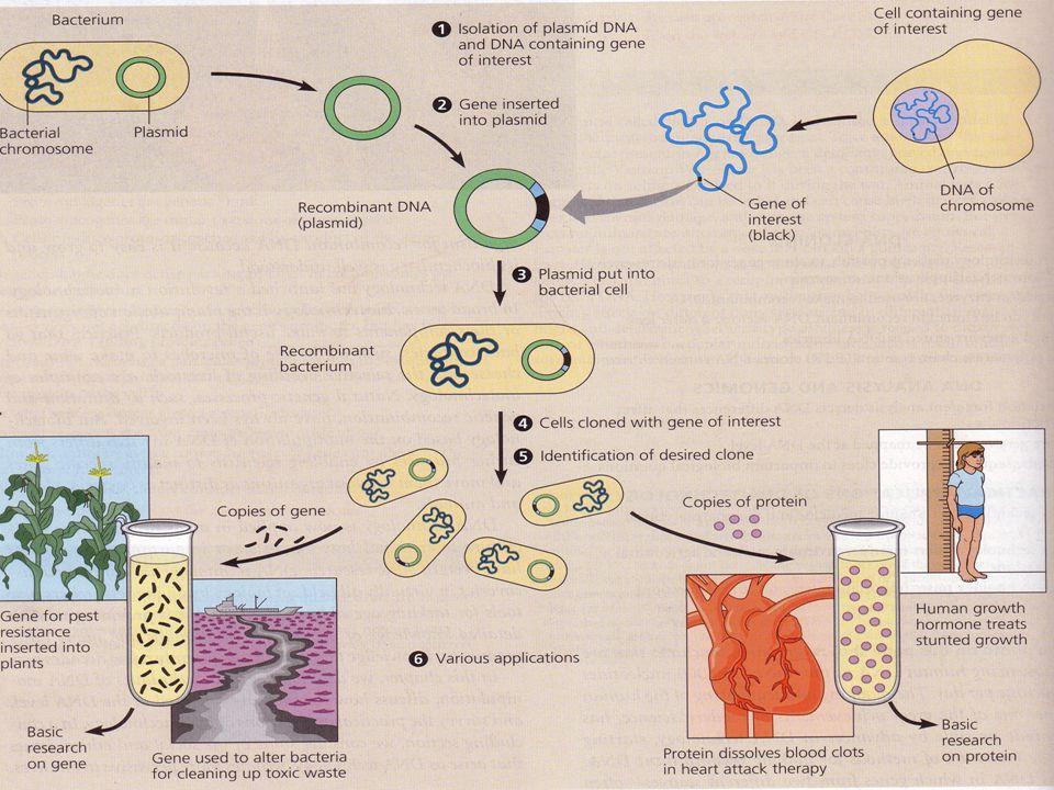 Terima kasih telah mengunjungi http://masbudi.net.tchttp://masbudi.net.tc KOSMID Gabungan Antara Bagian Plasmid dan Bagian Sisi Cos dari Bakteriofage BAGIAN PLASMID Titik Replikasi (ORI) Penanda Ketahanan Genetik Tempat-tempat Restriksi Untuk Penyisipan Gen