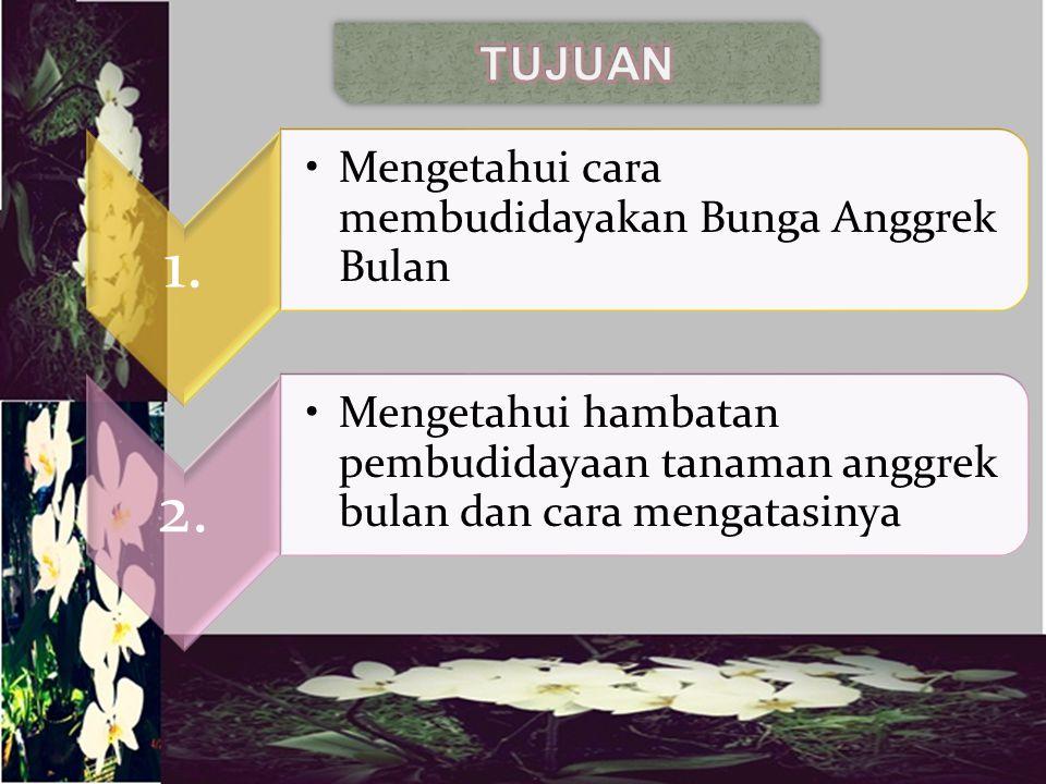  Terdapat dua cara pembudidayaan Bunga Anggrek Bulan: a.Vegetatif b.Kultur Jaringan  Hambatan dalam pemeliharaan Bunga Anggrek Bulan  Alasan sulitnya,pemeliharaan Bunga Anggrek Bulan