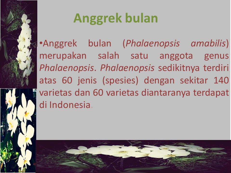 Metode yang digunakan dalam budidaya tanaman anggrek bulan adalah kultur jaringan.