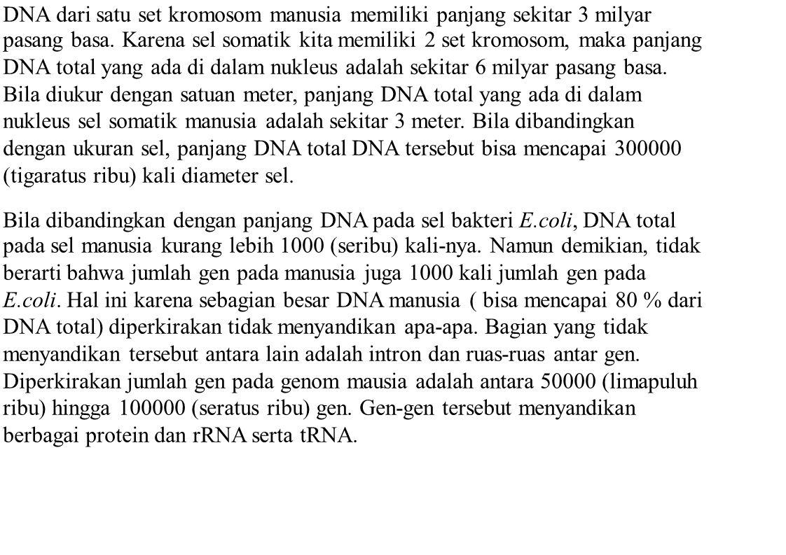 DNA dari satu set kromosom manusia memiliki panjang sekitar 3 milyar pasang basa. Karena sel somatik kita memiliki 2 set kromosom, maka panjang DNA to
