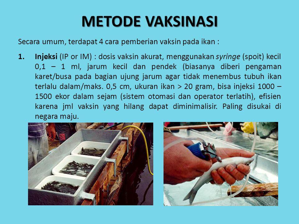 2.Imersi/celup (dipping) : ikan dicelup dalam larutan vaksin sekitar 30 detik, solusi vaksin 1 : 10 sampai 2 : 8 (tergantung jenis dan konsentrasi vaksin), 1-2 liter vaksin bisa untuk 100 kg ikan dengan jumlah maks dipping 20 kali, vaksin umumnya masuk melalui insang dan kulit, stres kurang namun tidak seefektif injeksi.