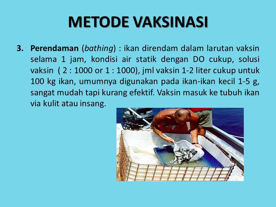 3.Perendaman (bathing) : ikan direndam dalam larutan vaksin selama 1 jam, kondisi air statik dengan DO cukup, solusi vaksin ( 2 : 1000 or 1 : 1000), j
