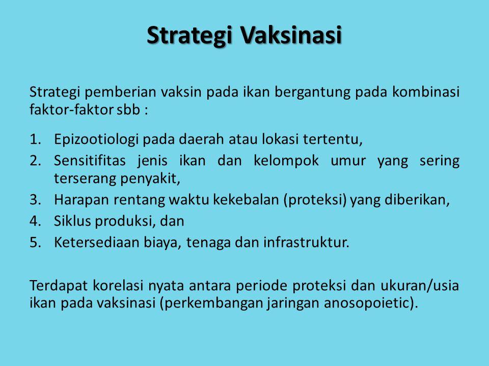 Strategi Vaksinasi Strategi pemberian vaksin pada ikan bergantung pada kombinasi faktor-faktor sbb : 1.Epizootiologi pada daerah atau lokasi tertentu,