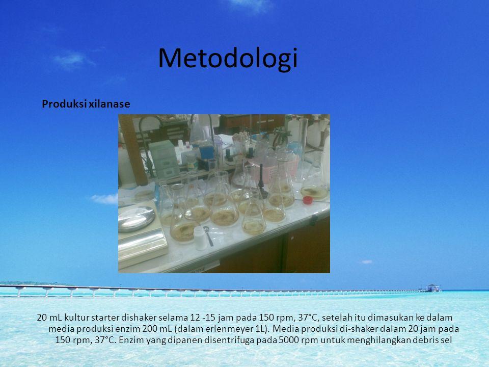 Metodologi 20 mL kultur starter dishaker selama 12 -15 jam pada 150 rpm, 37°C, setelah itu dimasukan ke dalam media produksi enzim 200 mL (dalam erlen